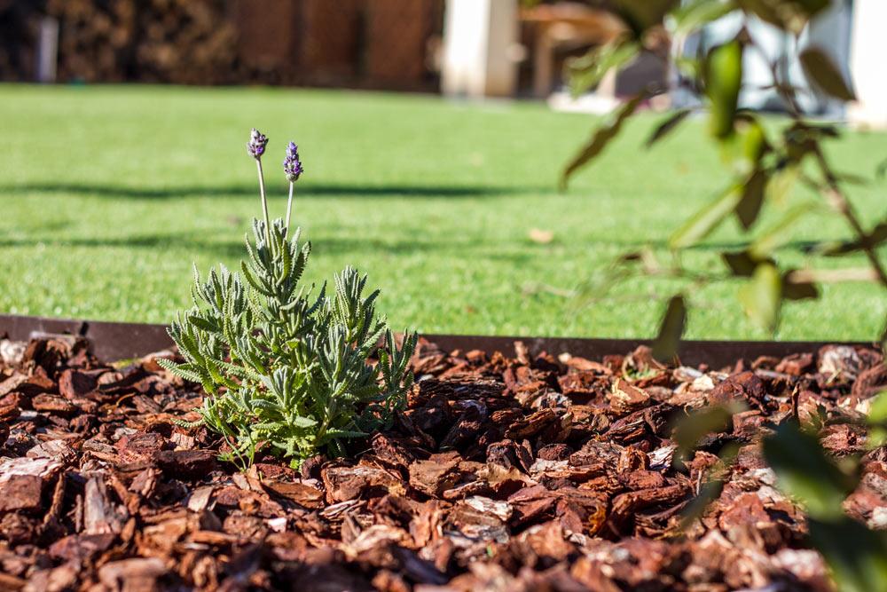 Corteza de pino extra campus vital jard pond for Jardineria decorativa